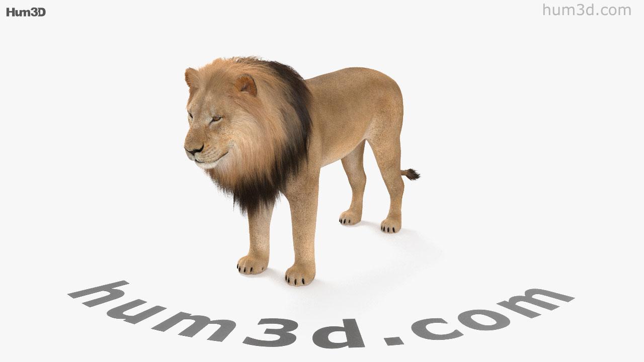 360 view of lion hd 3d model - hum3d store