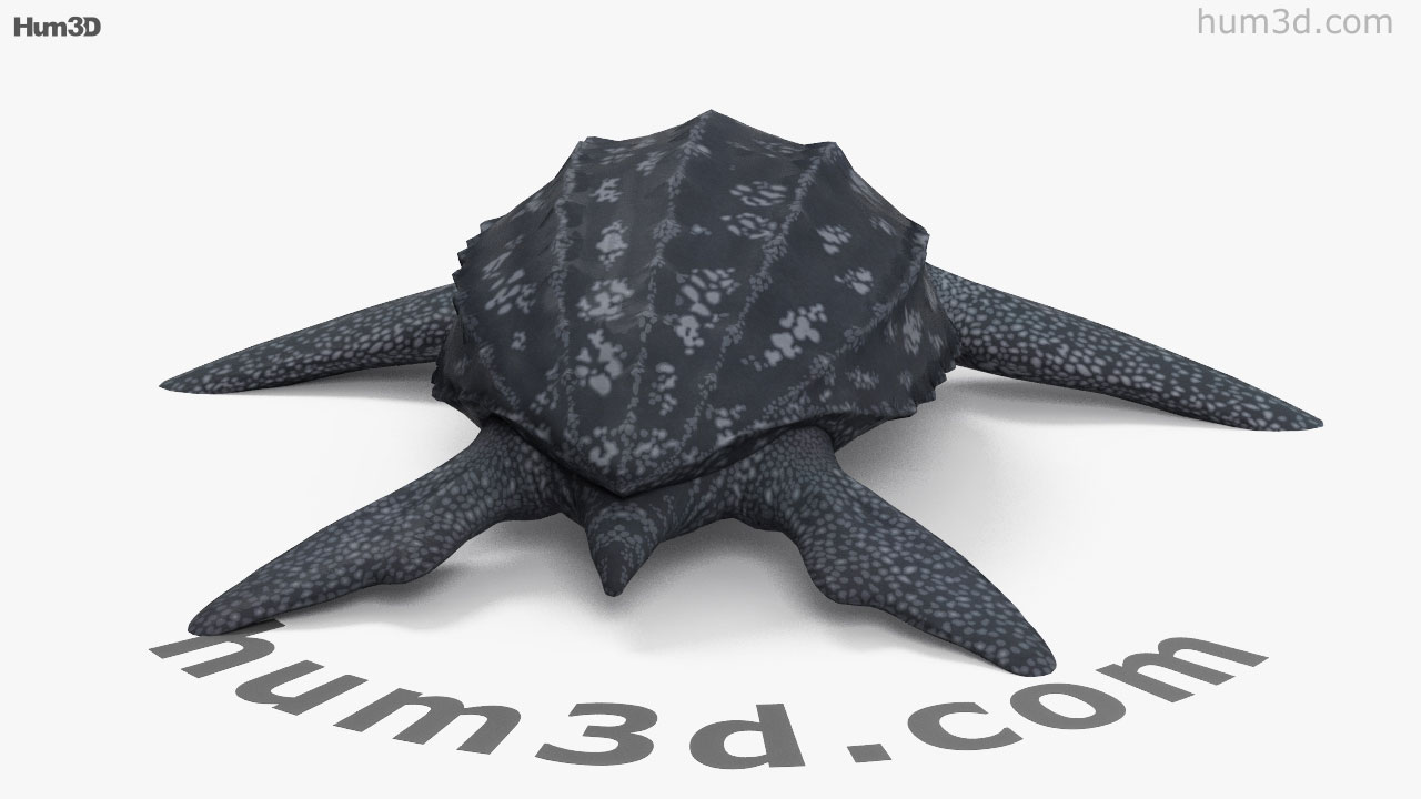 360 view of leatherback sea turtle hd 3d model hum3d store leatherback sea turtle hd 3d model jeuxipadfo Image collections