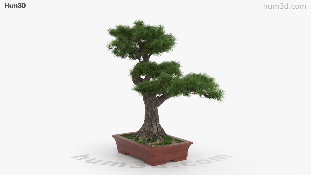 360 View Of Bonsai Tree 3d Model Hum3d Store