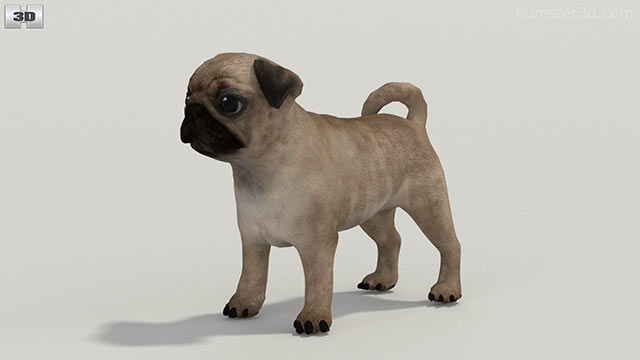 360 View Of Pug Puppy 3d Model Hum3d Store