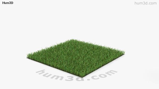 Grass 3D model - Plants on Hum3D